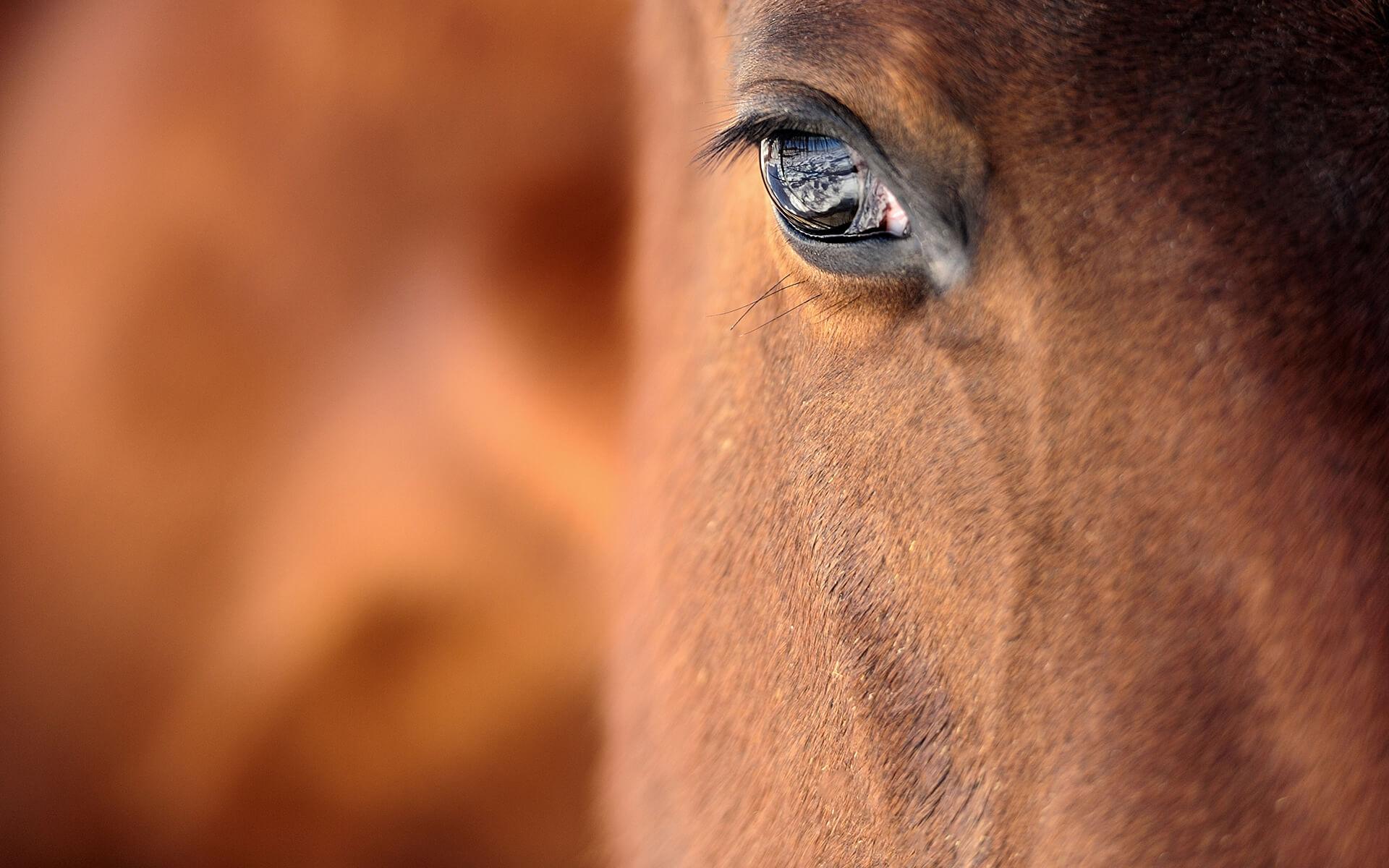 Красив кон