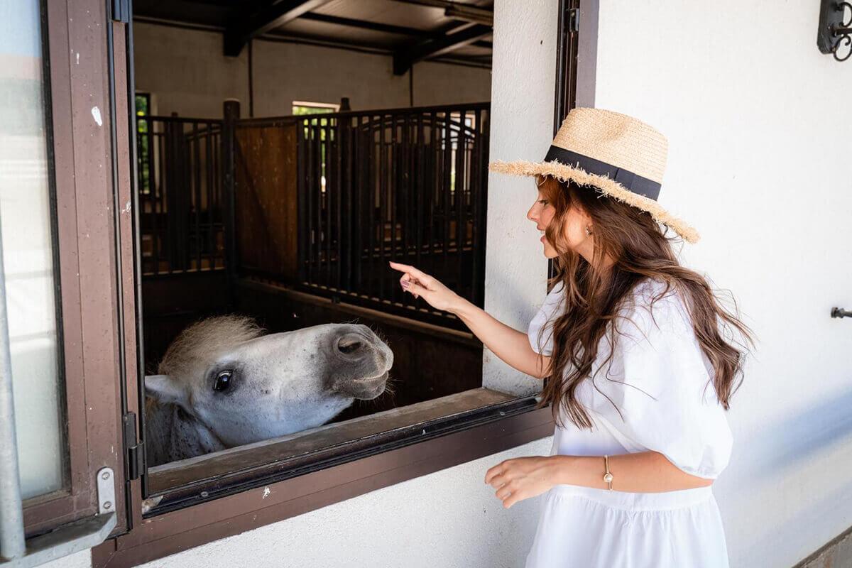 Понито Арчи иска внимание